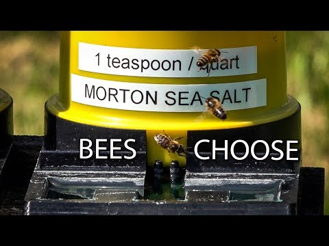Honey Bees Need Salt and Minerals, Sea Salt Preferences, Bee's First Choice!