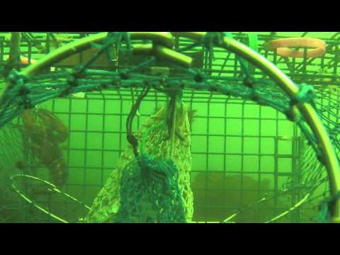 Lobster trap cam