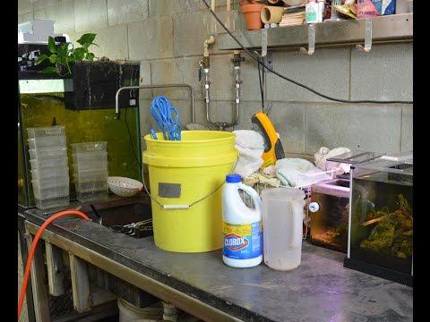 Disinfecting Aquarium Equipment!