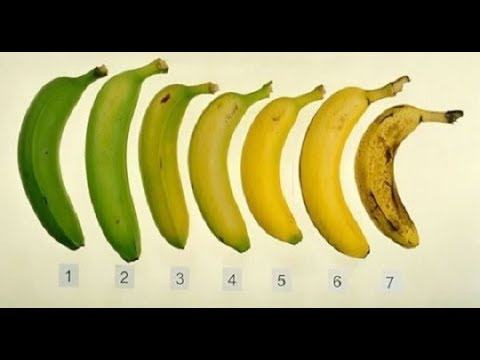 WHICH BANANA IS HEALTHIEST OF THESE SEVEN