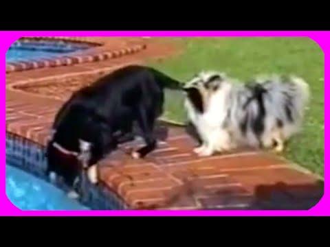 The Power Of Dog Teamwork