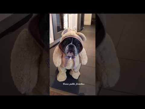 dog in his bear onesie 😂🐻