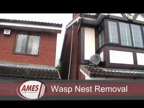 Wasp Nest Removal From Loft In Birmingham UK