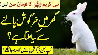 Rabbit palna in islam   Khargosh Palna Kaisa Hai   Khargosh Ka Gosht Khana Kesa Hai