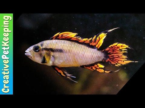 FISH ON FIRE 🔥 Amazing TINY Fish in Natural Aquarium
