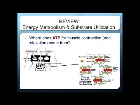 Industry Presented Webinar  The carbohydrate conundrum  Are carbs essential or obsolete?