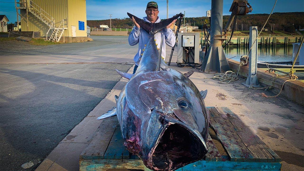 $1,000,000.00 FISH {Catch Clean Cook} GIANT BlueFin TUNA!!!