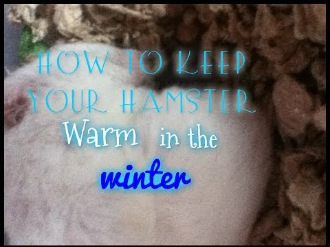 How to Keep Your Hamster Warm in the Winter
