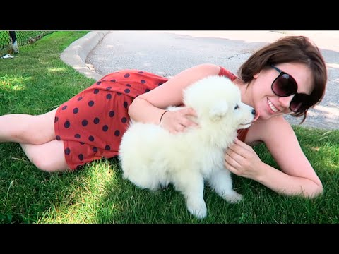 GETTING MY NEW SAMOYED PUPPY :D