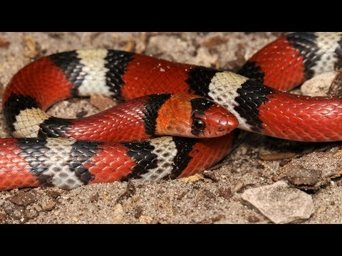 Herping in Florida Catching 5 Snake Species in One Day
