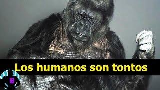 3 Animales que hablaron y dejaron tristes mensajes a la humanidad