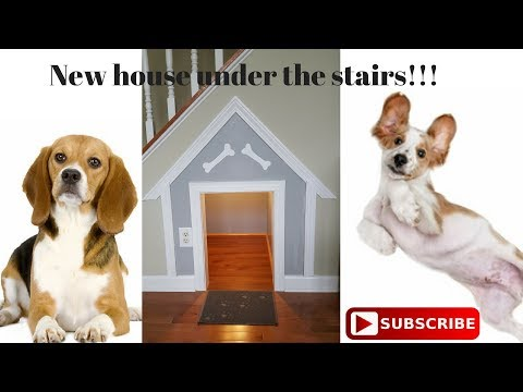 Dog house under the stairs!!!