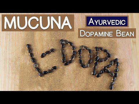 Mucuna Pruriens, The Ayurvedic Dopamine Bean