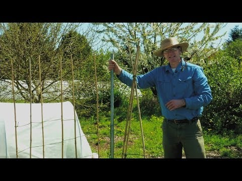 Garden Trellis Ideas for Tomatoes and Other Crops