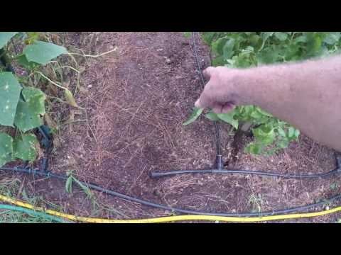 GARDEN DAMAGED BY STORM AND HOT WEATHER TIP