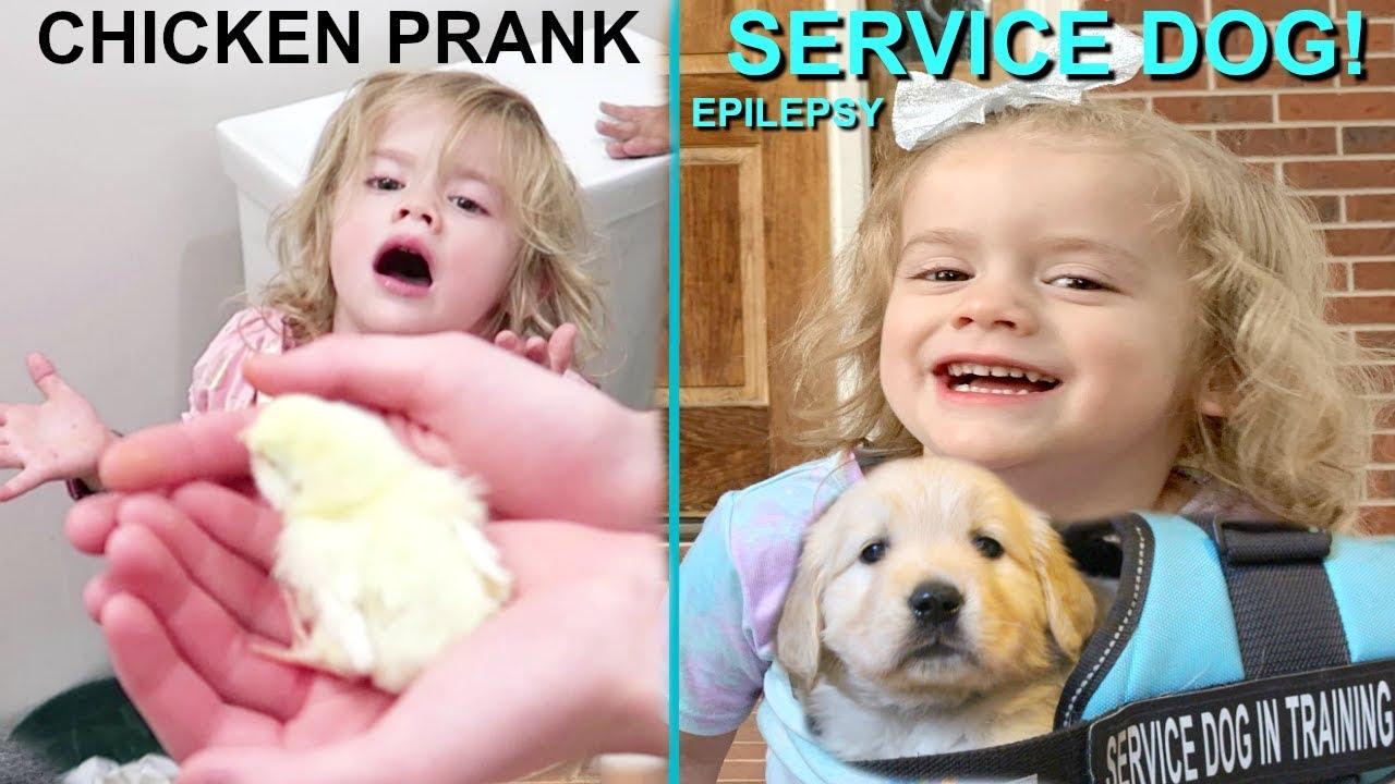 SERVICE DOG EPILEPSY | CHICKEN PRANK