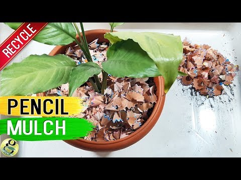 PENCIL SHAVINGS IN GARDENING: Pencil Mulch  |  Benefits of Recycling Pencil Waste in Garden
