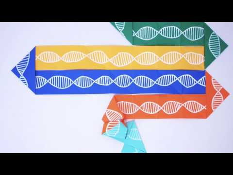 DNA Origami: How do you fold a genome?