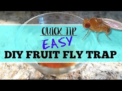 Quick Tip   DIY BEST EVER Fruit Fly Trap
