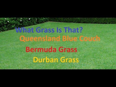 [What Grass Is That] [Queensland Blue Couch] [Couch Grass] [Bermuda Grass] [Durban Grass]