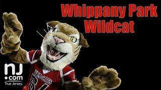 Mascot Challenge: Whippany Park Wildcat