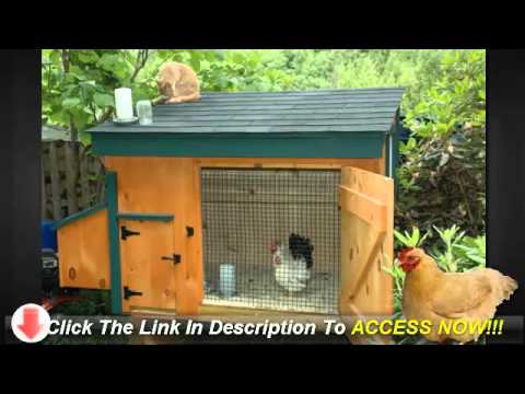 Build Chicken Coops For Your Backyard - Things to Think About