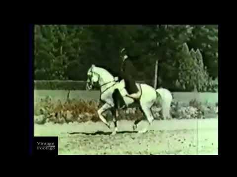 SRS Hofreitschule Wien | 1944 | Spanish Riding School