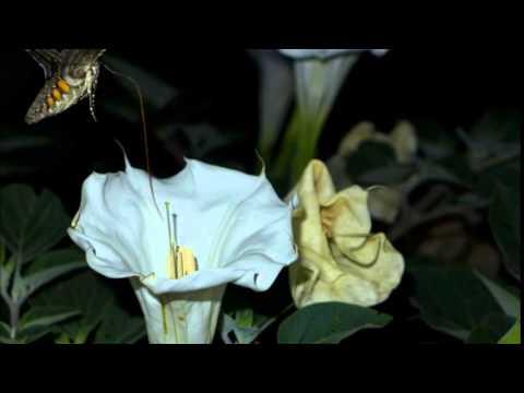 Moon Flower 2014