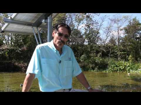 Missouri Wind and Solar Clearing Pond Weeds using Grass Carp