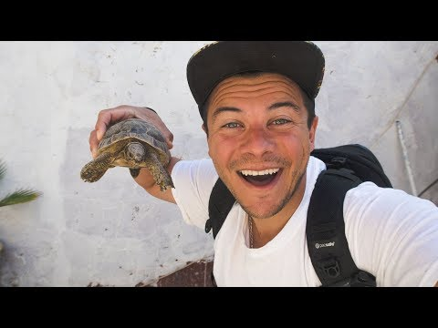 Apartment Shopping in Morocco | It comes with a pet turtle |
