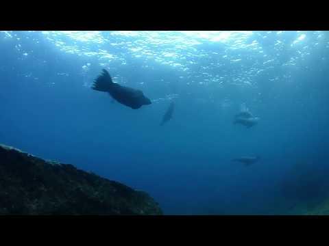 Suspensión temporal de nado con lobo marino en Espíritu Santo