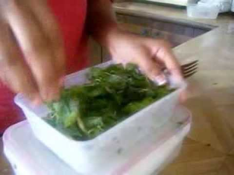 how to store cliantro or coriander leaves for 1 month