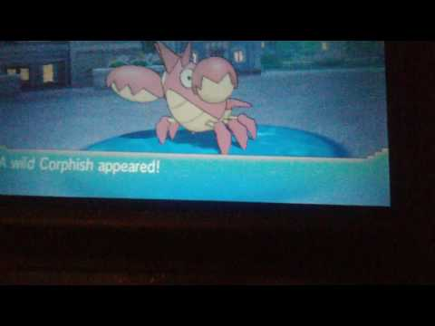 SHINY CORPHISH REACTION