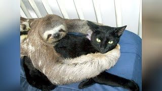 Super WEIRD & CUTE ANIMAL FRIENDSHIPS - I BET you will LAUGH FOR HOURS