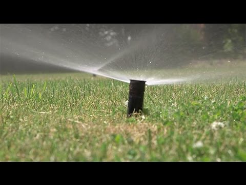 Integrated Pest Management for Turfgrass