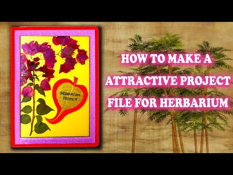 How to make a Herbarium project file || Attractive Project File for Herbarium