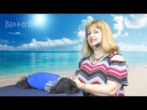 Solis UV Coverup Dog Shirt - Electric Blue