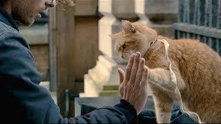 【宇哥】乞丐小伙捡到一只野猫带回收养,为报恩它竟帮小伙日赚万元