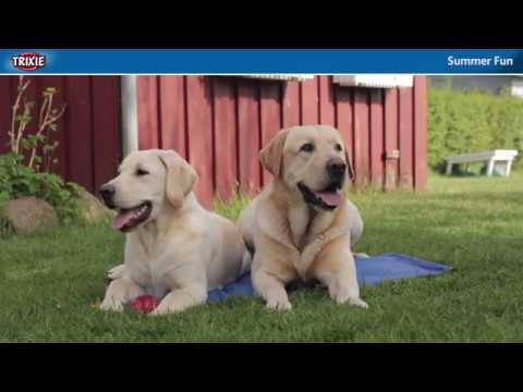 Our Summer Products Provide Cooling for Dogs in Hot Weather - TRIXIE Heimtierbedarf