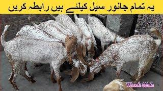 Low cast Goat Mandi in pakistan Videos & Books