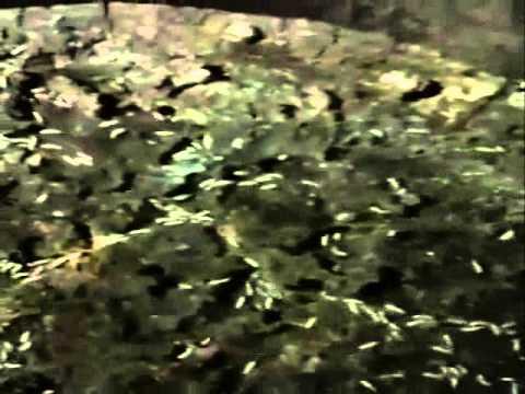 Termites in stump