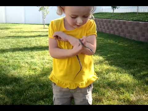 Little Backyard Snake