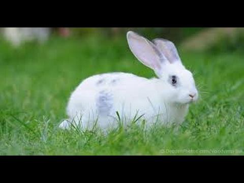 How to Rabbit Run