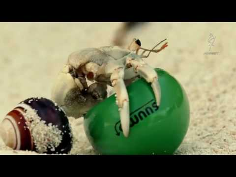 Creative Advertising Campaign SUUMO(スーモ 広告キャンペーン)  'Shell we move'    Hermit Crab