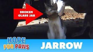 A broken jar over this cat