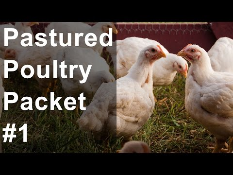 Pastured Poultry Packet #1 - Profitable Broiler Chicken Farming