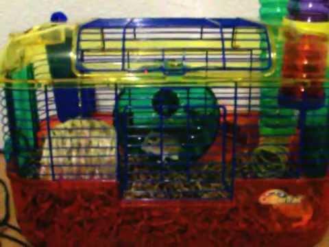Noisy Hamster Wheel