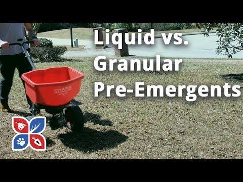 Do My Own Lawn Care - Liquid v. Granular Pre Emergents - ep.41