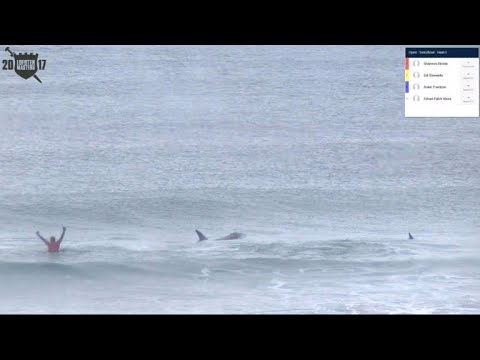 Killer Whales, the unlikely competitors in Norway surf contest