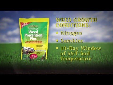 Organic Lawn Care: Weed Control